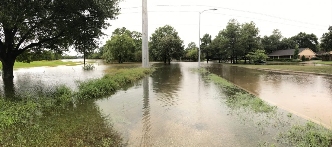 Grassy area with trees flooded after hurricane